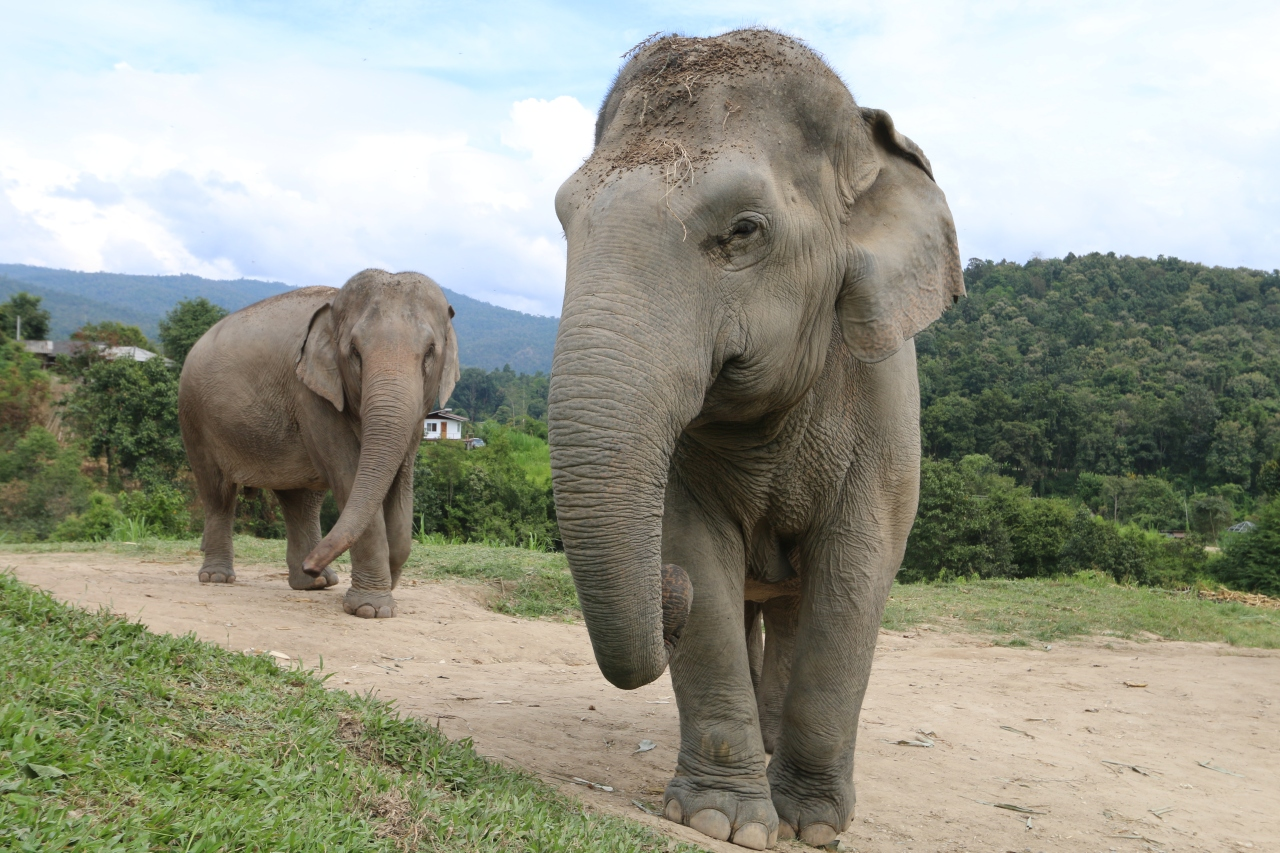 Our Day with Elephants, the Gentle Giants of Thailand